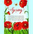 spring time greeting card of poppy flowers vector image vector image