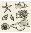 Seashells hand drawn set vector image