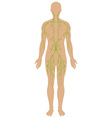 Lymphatic diagram in human being vector image