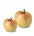 Watercolor Apple vector image