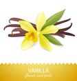vanilla icon vector image