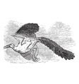 Archaeopteryx bird vintage vector image vector image