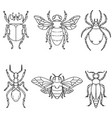 set of beetle isolated on white vector image