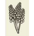 Muscari flowers card vector image