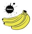 fruit yellow bananas vector image