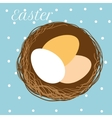 Easter eggs in nest vector image