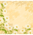 Background chamomile flowers vector image