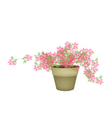 A Pink Flowering Plants in Flower Pot vector image