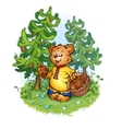 bruin bear with pine cones vector image