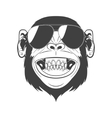 Monkey with sunglasses vector image