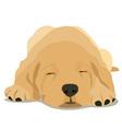 sleepy labrador puppy vector image