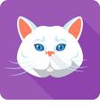 White british Cat icon flat design vector image vector image