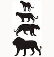 Predators carnivorous big cats vector image