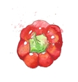 Red bell pepper vector image vector image