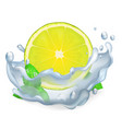 juicy lemon or lime and leaves of peppermint icon vector image