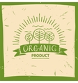 organic product Hand drawn three fruit vector image