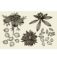 Sketch set of Nigella sativa flowers and leaves vector image