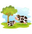 2 cows vector image