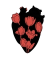 The human heart with tulips INSIDE vector image