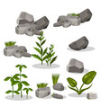 plants and stones vector image