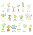 Herbs and spices set in pots with flowers vector image