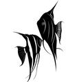 Pterophyllum vector image