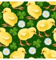 Seamless chicken and clover vector image