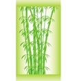 Stalks and bamboo leaves vector image