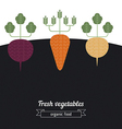 Beets Carrots Turnips vegetables vector image
