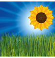 grass with sunflower vector image vector image