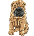 cute red Shar Pei dog puppy smiles vector image