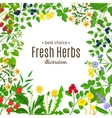 Medical herbs frame with text background vector image