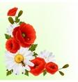Poppy daisy background vector image