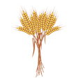Wheat vector image vector image