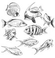 reef fishes set vector image vector image