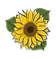 hand drawn yellow sunflower vector image