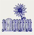 Sunflower and fence vector image