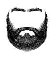 beard mustache eyebrows vector image