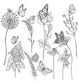 wildflowers and insects sketch vector image