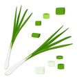 the onion vector image