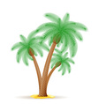 palm tree 24 vector image vector image
