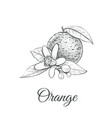 orange sketch with flower orange vector image