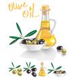 olive oil on white vector image