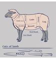 Lamb Cuts Diagram vector image