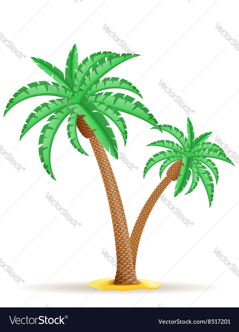 Palm tree 25 vector