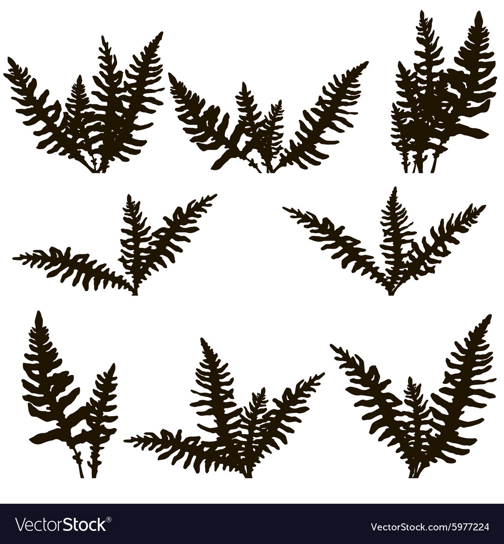 Set of ink drawing fern leaves vector