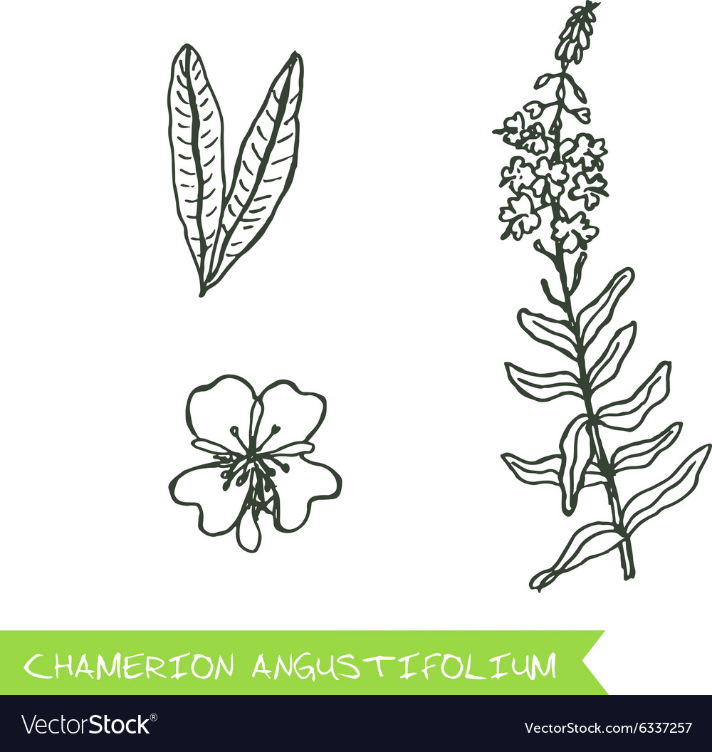 Handdrawn  health and nature set vector