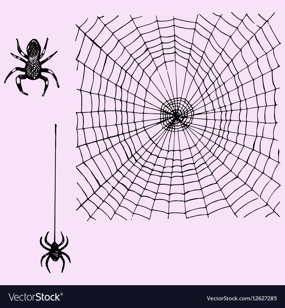 Web and hanging spider vector