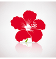Red Hibiscus Flower vector image
