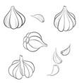 drawing garlic vector image